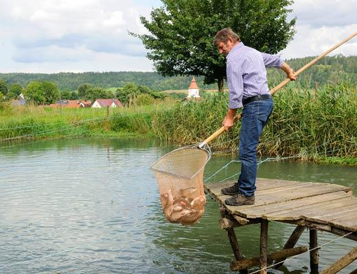 Fischladen hofladen fische frisch r ucherfische ferienhof for Fische im naturteich